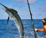 pesca aguja torneo