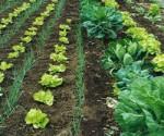 produccion agrícola