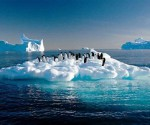 cambio climatico pinguinos para blogs