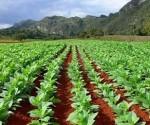 Agricultura Pinar