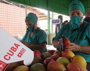 Ceballos agricultural enterprise begins export of fresh