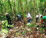 Cuba bosques