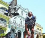 Cuba Covid, palomas