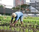 Cuba Agrcltura urbana